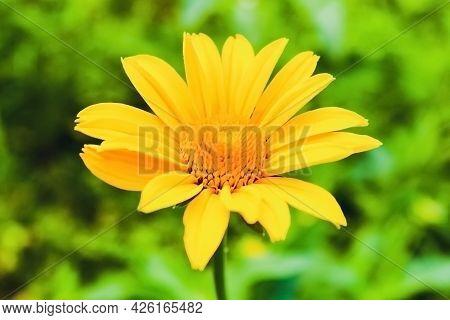 Yellow Flower On Green Background. High Quality Photo