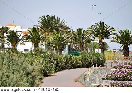 A Beautiful Alley Surrounded By Flowers, Green Bushes And Palm Trees, And Behind Them White Houses W