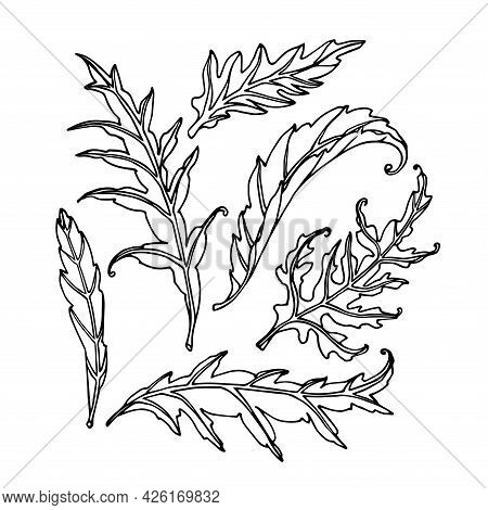 Set Of Artichoke Leaves, Floral Decorative Element For Patterns, Ornaments, Vector Illustration With