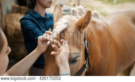 Close-up View Of Girls Hand Braiding Mane Of A Light Brown Horse With A Blonde Mane. Beautiful Chest