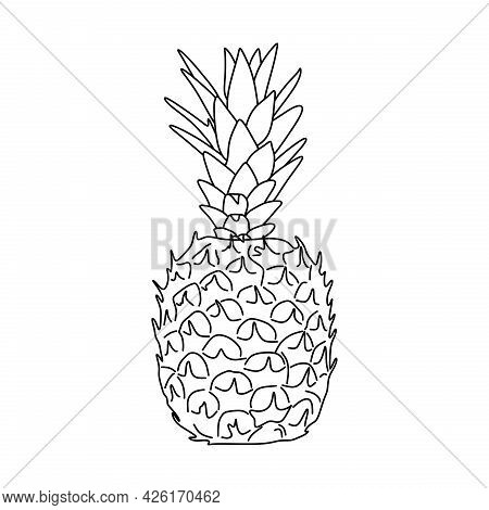 Pineapple Fruit Illustration. Pineapple Fruit Line Sketch. Pineapple Fruit Symbol