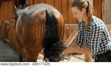 Horsewoman Cleaning Tail Of Her Dark Bay Horse. Stallion Being Cleaned In The Stable. The Girl Dress