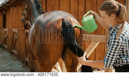 Horsewoman Cleaning Tail Of Her Dark Bay Horse. Pouring Water From A Mug On Its Tail. Stallion Being