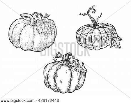 Pumpkin Set Line Art Sketch Engraving Vector Illustration. T-shirt Apparel Print Design. Scratch Boa