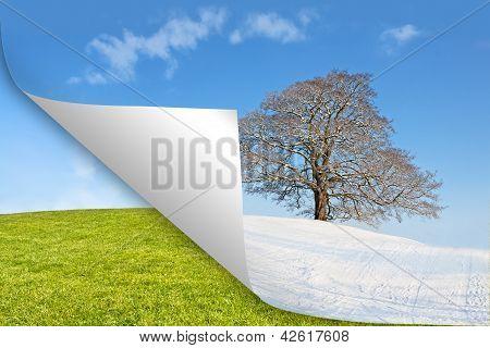 calendar tree summer vs winter
