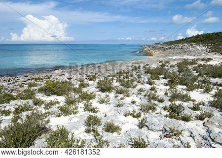 The Rocky Landscape With Spare Vegetation On A Coastline Of Half Moon Cay (bahamas).
