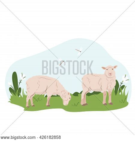 Lovely Country Rural Landscape, Sheep Graze, Flowers, Pasture. Country Pet Lamb. Isolated Character