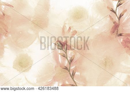 Beige anemone flower background isolated