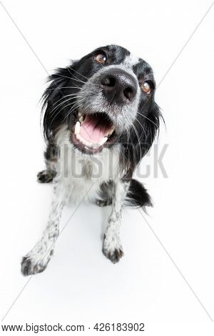 Portrait Happy Puppy Dog Isolated On White Background. Obedience Concept