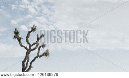 Lone Joshua tree in the Californian desert