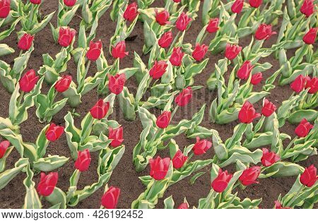 Gardening Tips. Growing Flowers. Growing Bulb Plants. Enjoying Nature. Soil For Growing Flowers. Gro