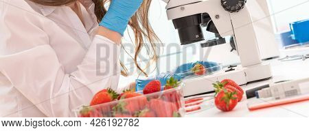 Quality inspection of  food  Checking the content of nitrates and herbicides in strawberries