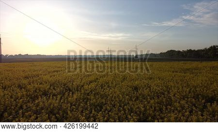 Aerial Drone View Flight. Flying Over Rapeseed Field During Rapeseed Flowers
