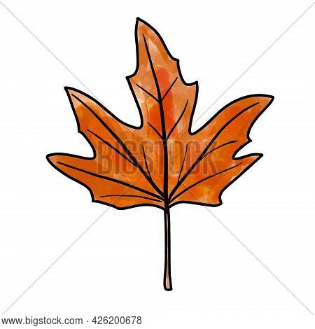 Bright Orange Red And Brown Watercolor Aquarelle Artistic Maple Leaf With Outline Vector Illustratio