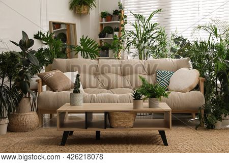 Stylish Room Interior With Comfortable Sofa And Beautiful Potted Plants. Lounge Zone