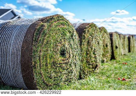 Row Of Rolled Up Sod Bundles Ready To Install On A New Residential Construction Job