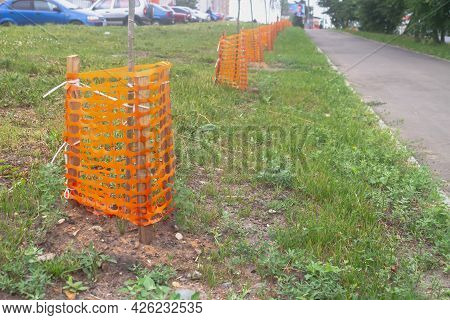 Young Trees Are Planted Along The Road And Fenced With A Protective Fence.