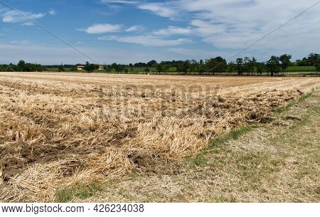 Wheat Fields In Emilia Romagna During The Harvest. Bologna Countryside, Po Valley, Italy