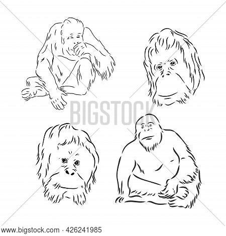 Sketch Doodle Drawing Orangutan, Excellent Vector Illustration, Eps 10
