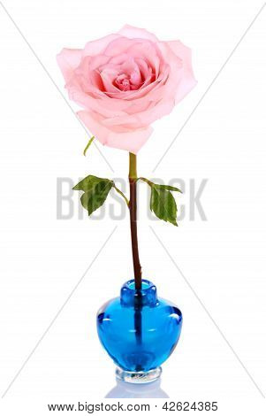 Single pink rose in blue vase isolated poster