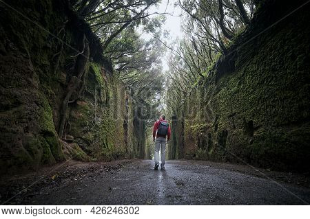 Rear View Of Man Is Walking Along Road Between Rocks In The Middle Of Mysterious Foggy Forest. Tener