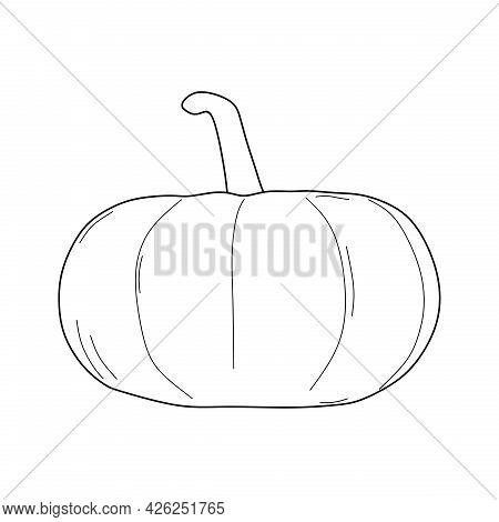 Pumpkin Illustration. Pumpkin Fruit Line Sketch. Pumpkin Symbol