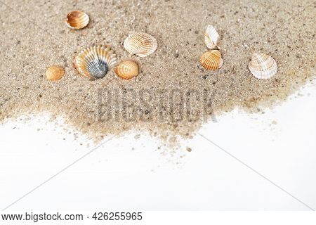 Ribbed Sea Shells Scatter On Sand Surface With Copy Space