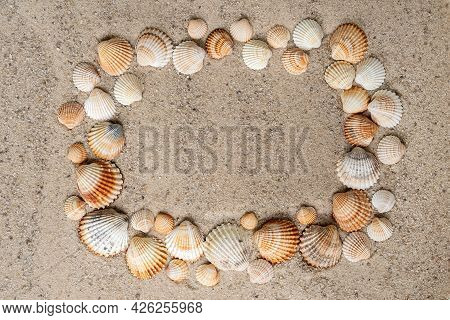 Ribbed Shells On The Sandy Beach Laid Out Like A Frame