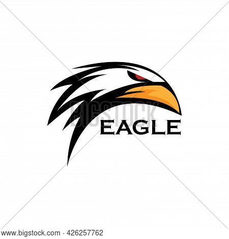 Head Eagle Animal Design Vector. Eagle Head Illustration Vector