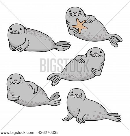 Set Of Gray Fur Seals. Vector Hand Drawn Cute Cartoon Fur Seal  Isolated On White Background. Ocean