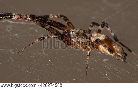 Spider In Its Web, Macro Photography, Dark Background, Selective Focus.