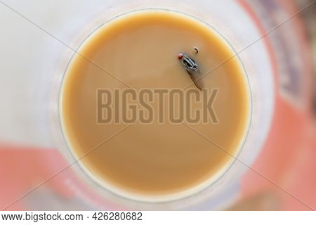 Housefly Swimming In Coffee Drink, Insect Flies Come On Coffee Drink And Waterborne Diseases, Flies