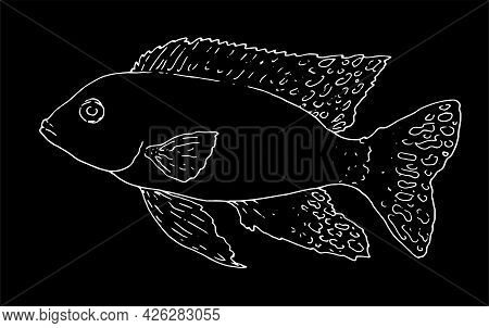 Vector Isolated Contour Of Aquarium Fish Aulonocara Firefish Hand-drawn In Sketch Style With A White