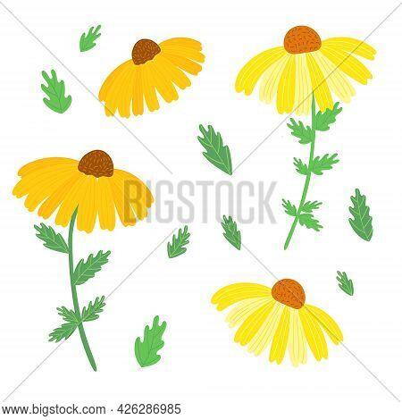 Rudbeckia Garden Flower Set, Black-eyed Susan Vector Simple Illustration In Vibrant Orange, Yellow A