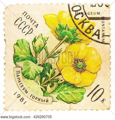Ussr - Circa 1981: Stamp Printed By Ussr, Shows Parageum Montanum, Circa 1981
