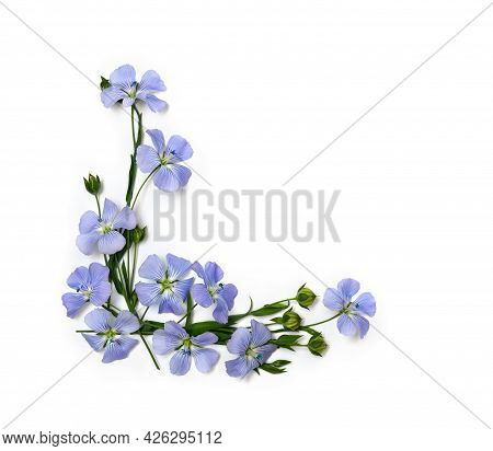 Blue Flowers Flax And Capsules With Seed Flax ( Linum Usitatissimum, Linseed ) On A White Background