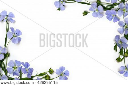 Frame Of Blue Flowers Flax And Capsules With Seed Flax ( Linum Usitatissimum, Linseed ) On A White B