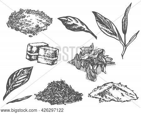 Set Of Ink Hand Drawn Tea Infuser Illustration. Vector Hand Drawn Illustration. Tea Ceremony.