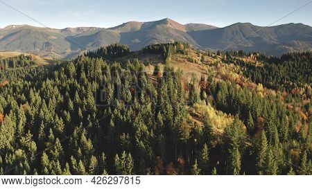 Colorful autumn forest at mountain ridge aerial. Nobody nature landscape at sun countryside. Isolated cottage at unbelievable fir, leafy tree in fall tones. Travel to Carpathian range, Ukraine, Europe