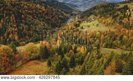 Mountain ranges with pine, leafy forest aerial. Autumn nobody nature landscape. Mist mount at green, yellow colors. Rural leaves, fir trees. Vacation at Carpathians, Ukraine, Europe