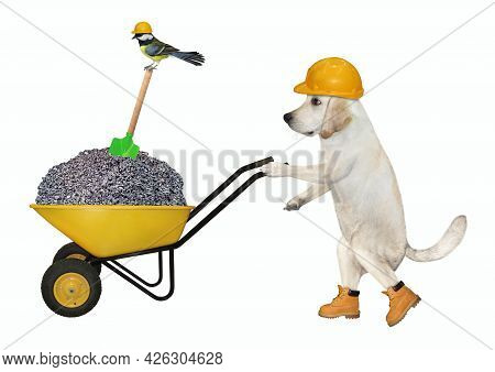 A Dog Labrador Builder In A Construction Helmet Pushes A Wheel Barrow Full Of Crushed Stone. White B