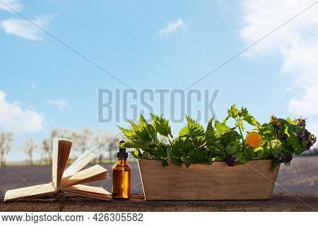 Natural Herbal, Photo In Natural Light. Alternative Medicine Concept - Copy Space.