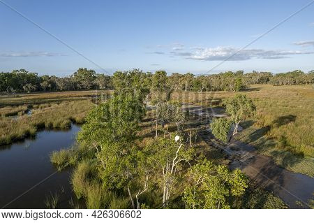 A Cattle Egret Nesting In A Tree In A Wetlands Ecosystem, Aerial View