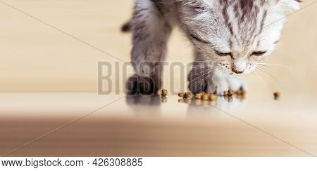 Baby Kitten Eats Food On The Floor. Scotish Strite Small Cat. Banner With Copy Space.