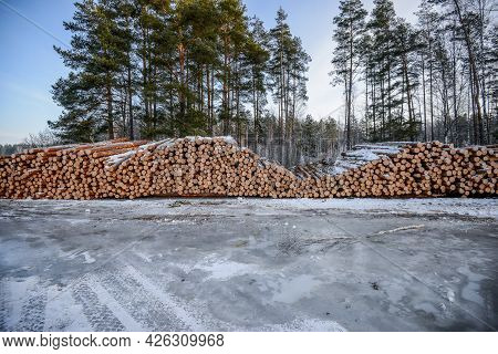 Belarus - 02.02.2015 - Ttimber For Loading On A Truck Against The Background Of The Winter Forest. H