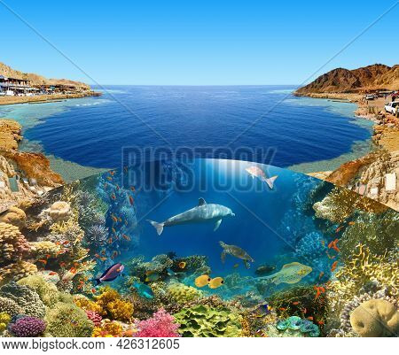 Scuba Diver Over Underwater Canyon At Blue Hole At Dahab, Egypt. Collage With Coral And Fish