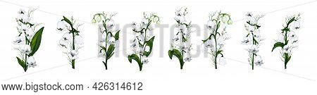Hand-drawn Set With Flowers Of The Lily Of The Valley, Primrose. Realistic Composition Isolated On W