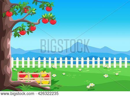 Apple Tree With Ripe Apples In The Garden Against The Blue Sky. Harvesting Apples. Harvest Celebrati