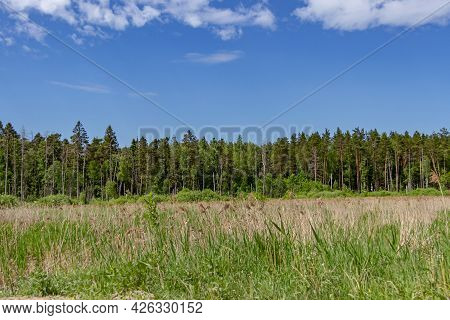 Mixed Forest Trees. A Forest Of Pine, Spruce, Oak And Birch Against A Summer Blue Sky. Seasonal Land
