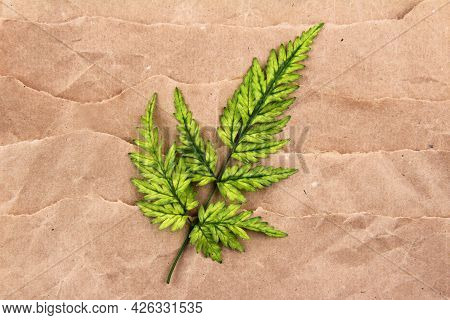 A Minimalistic Fern Branch Of A Beautiful Yellow-green Color, Lying On A Background Of Craft Paper.a
